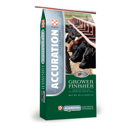 Purina Accuration Backgrounder. Green and blue feed bag. Features black cows at feed trough.