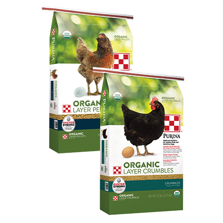 Purina Organic Layer Crumbles. Two green poultry feed bags.