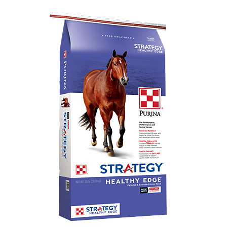 Purina Strategy Healthy Edge Horse Feed. Blue and white feed bag. Brown horse.