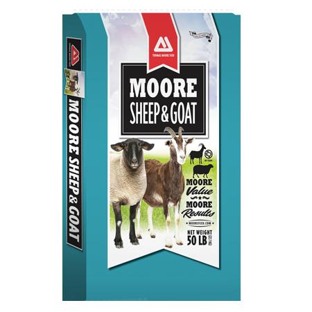 Thomas Moore Sheep & Goat 16 DQ