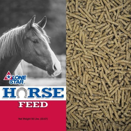 Red and grey feed bag. Brown horse. Pelleted ration for beef cattle and mature horses